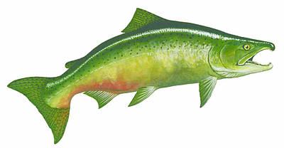 Painting - Fall Chinook Salmon by Shari Erickson