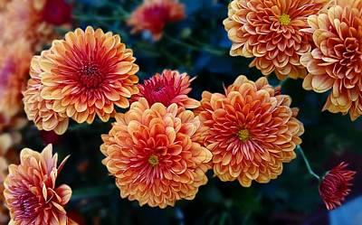 Photograph - Fall Chrysanthemums by Joe Duket