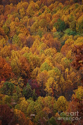 Art Print featuring the photograph Fall Cluster by Eric Liller