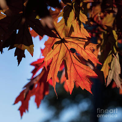 Photograph - Fall Color 5528 21 by M K  Miller
