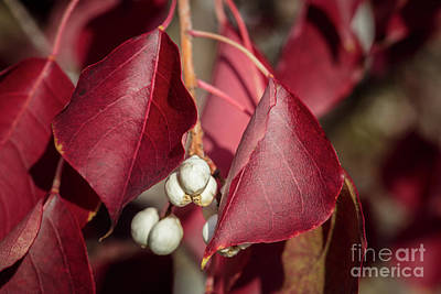 Photograph - Fall Color 5528 27 by M K Miller