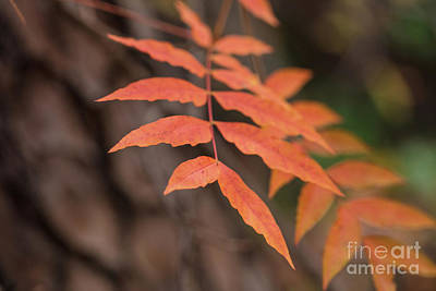 Photograph - Fall Color 5528 30 by M K Miller