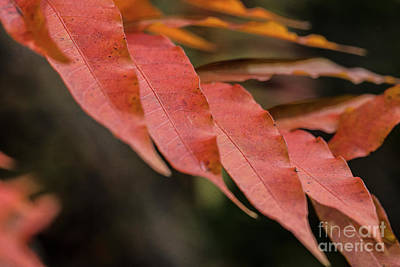Photograph - Fall Color 5528 31 by M K Miller