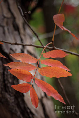 Photograph - Fall Color 5528 32 by M K  Miller