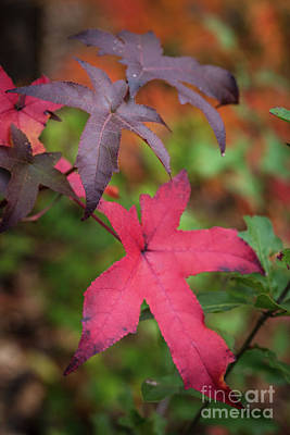 Photograph - Fall Color 5528 47 by M K Miller