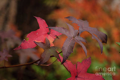 Photograph - Fall Color 5528 49 by M K Miller