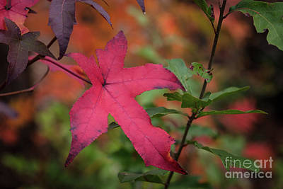 Photograph - Fall Color 5528 50 by M K  Miller