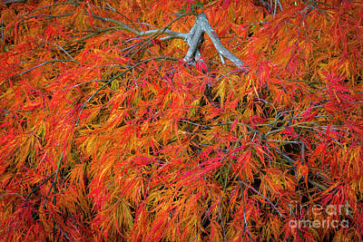 Photograph - Fall Color Abstract by Sonya Lang