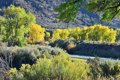 Photograph - Fall Color Along Colorado River by Ray Mathis