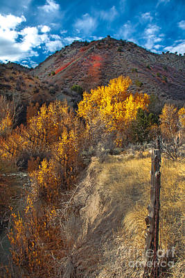 Photograph - Fall Color Along Fence Line by Robert Bales