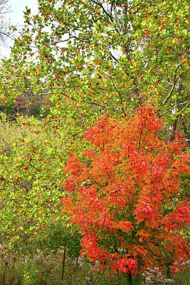 Photograph - Fall Color Along Mississippi Rive In Illinois by Ray Mathis