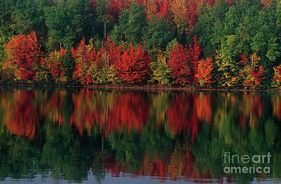 Photograph - Fall Color Along Moccasin Lake Michigan by Dave Welling