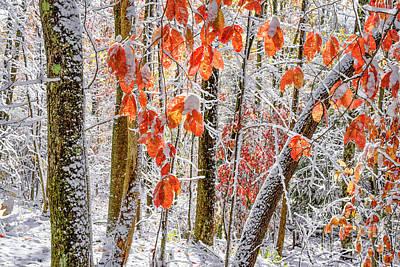 Photograph - Fall Color Autumn Snow by Thomas R Fletcher