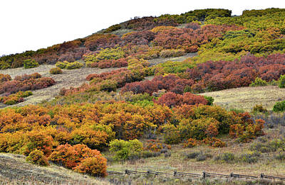 Photograph - Fall Color Comes To Last Dollar Road Hills by Ray Mathis