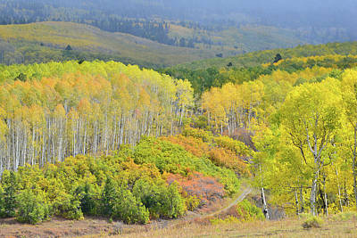 Photograph - Fall Color Comes To Last Dollar Road by Ray Mathis