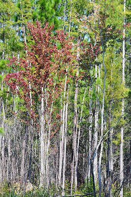Photograph - Fall Color Comes To The Forest by rd Erickson