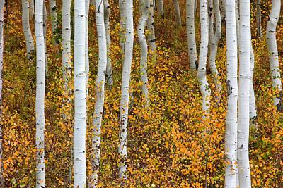 Fall Color Art Print by Dori Peers