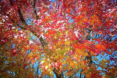 Photograph - Fall's Color Explosion by Lynn Bauer