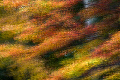 Art Print featuring the photograph Fall Color Impressions by Kevin Blackburn