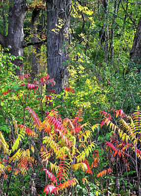 Photograph - Fall Color In The Forests Of Chain-o-lakes by Ray Mathis
