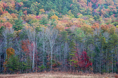 Photograph - Fall Color In The Smokies by David Morel