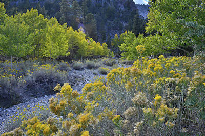 Photograph - Fall Color In Wash Beneath Mt. Charleston by Ray Mathis