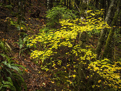 Pteridophyte Photograph - Fall Color by Jean Noren