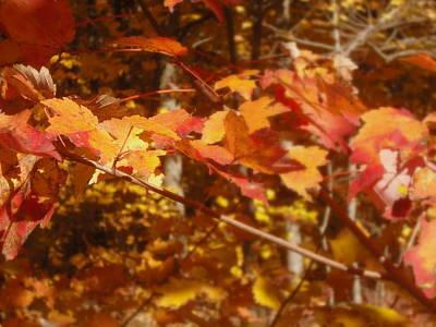 Fall Color Art Print by John Julio