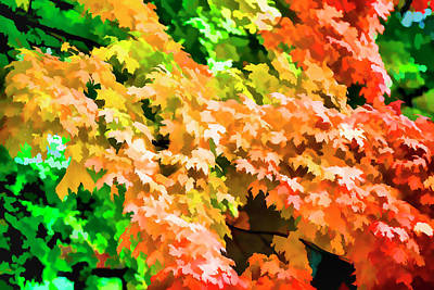 Photograph - Fall Color by Kevin Cable