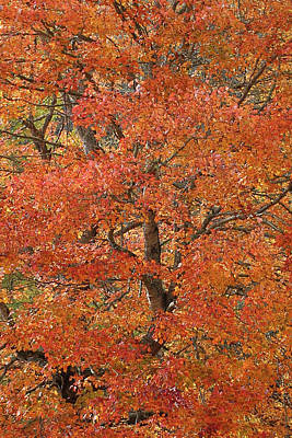 Photograph - Fall Color by Lamarre Labadie