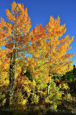 Photograph - Fall Color Morning In Dillon Co by Ray Mathis