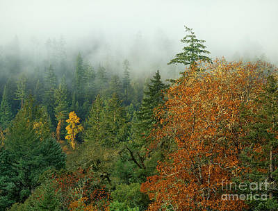 Photograph - Fall Color On A Foggy Morning Central California by Dave Welling