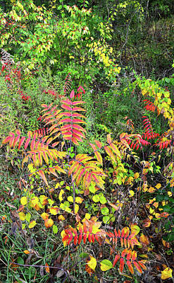 Photograph - Fall Color On Forest Floor In Chain-o-lakes Sp by Ray Mathis