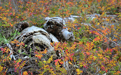 Photograph - Fall Color On The Beach by Ronda Broatch
