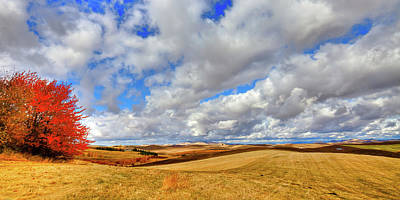 Photograph - Fall Color On The Palouse by David Patterson
