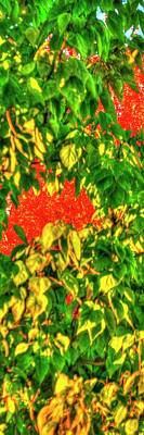Jerry Sodorff Royalty-Free and Rights-Managed Images - Fall Color P 211 by Jerry Sodorff