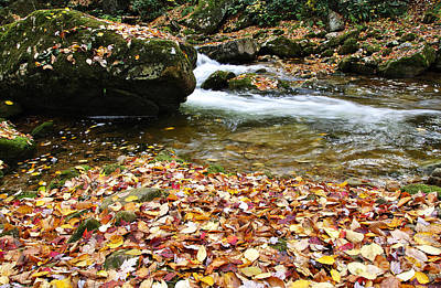 Fall Color Rushing Stream Art Print by Thomas R Fletcher