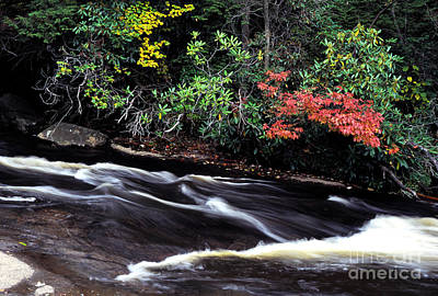 Muddy Creek Falls Photograph - Fall Color Swallow Falls State Park by Thomas R Fletcher