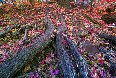 Photograph - Fall Color Tree Trunk by Dave Dilli