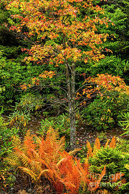 Photograph - Fall Color West Virginia Highlands by Thomas R Fletcher