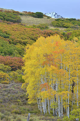 Photograph - Fall Colored Aspens On Last Dollar Road by Ray Mathis