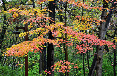 Photograph - Fall Colored Maples In Bull Valley by Ray Mathis