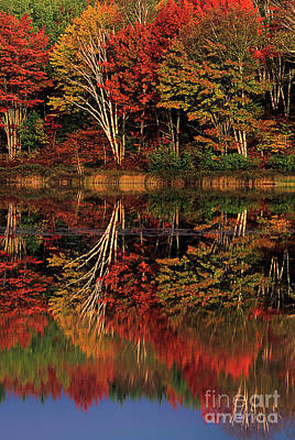 Photograph - Fall Colored Trees Thornton Lake Upper Peninsula Michigan by Dave Welling