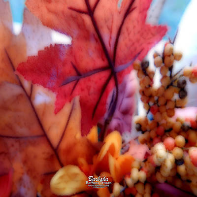 Fall Colors # 6059 Art Print