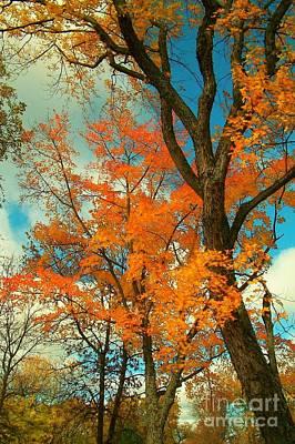Fall Colors 2 Art Print by Marjorie Imbeau