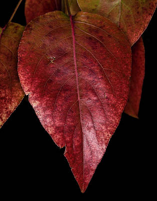 Photograph - Fall Colors 3 by James Sage