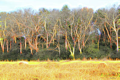 Digital Art - Fall Colors 480 by Ericamaxine Price