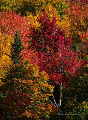 Dan Beauvais Royalty-Free and Rights-Managed Images - Fall Colors 8743 by Dan Beauvais