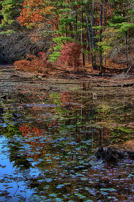 Photograph - fall colors abound in Harold Parker Sate Forest by Jeff Folger
