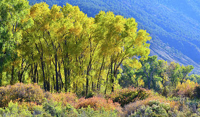 Photograph - Fall Colors Along Colorado River Near Silt by Ray Mathis